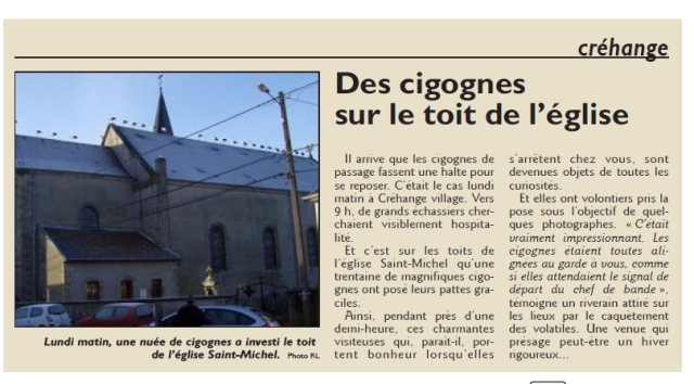 RL 04.02.14 - Des cigognes sur le toit de l'église (Créhange)